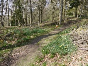 One of Kinnoull Hill's many woodland paths,