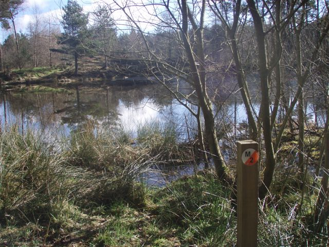 Forest and loch in the heart of Deuchny.